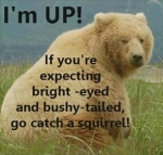 grumpy bear joke busy tail