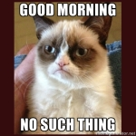 grumpy cat good morning no such thing
