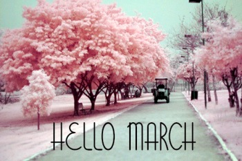 hello march car and pink trees